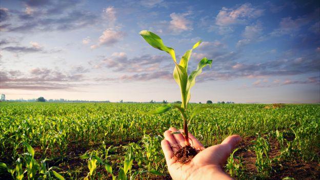 Bruxelles+e+agricoltura+biologica