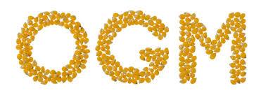 Le ricerche sull'impatto degli OGM sulla salute