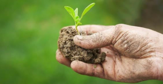 Biologico in Italia: in crescita territorio agricolo e esportazioni
