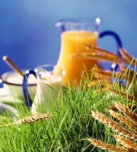Da cibo spazzatura a concime: ciao takeaway, benvenuto biologico