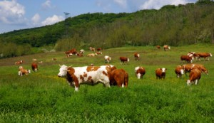 Agriculture: new green policies