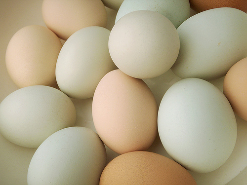 Artificial eggs: from USA the alternative plant for foods egg